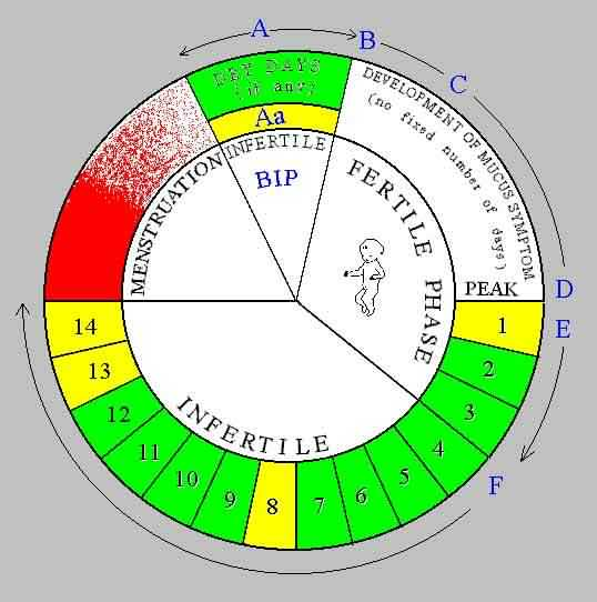 natural family planning method chart: Natural family planning calendar method chart fertility
